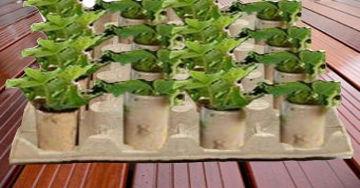 jardinage environnement pots et godets pour semis pratiques colo et gratuits. Black Bedroom Furniture Sets. Home Design Ideas