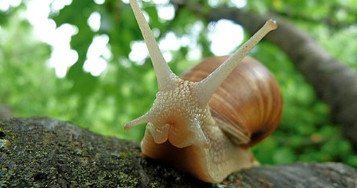 Tip: Repellent ecological cons snails and slugs